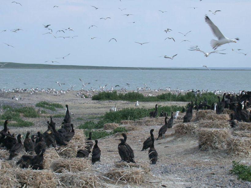 Сегодня на озере Барун-Торей – богатая фауна. А что будет завтра?