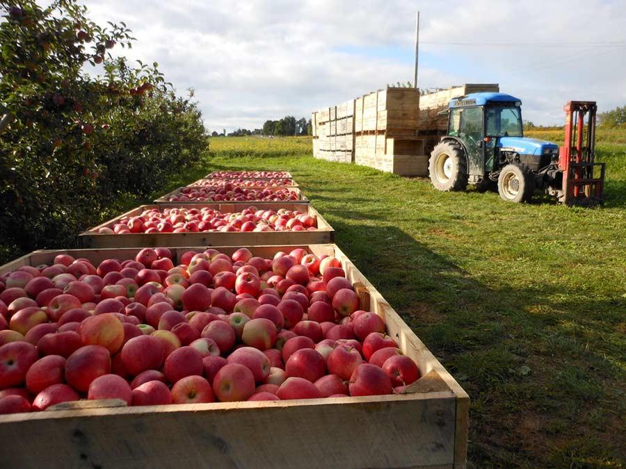 Яблоки из Молдовы как аргумент в пользу ориентации на российский рынок